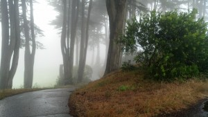 Looking toward the fogged-in Pacific Ocean at Lincoln Park, San Francisco. (Photo by Michael E. Grass)