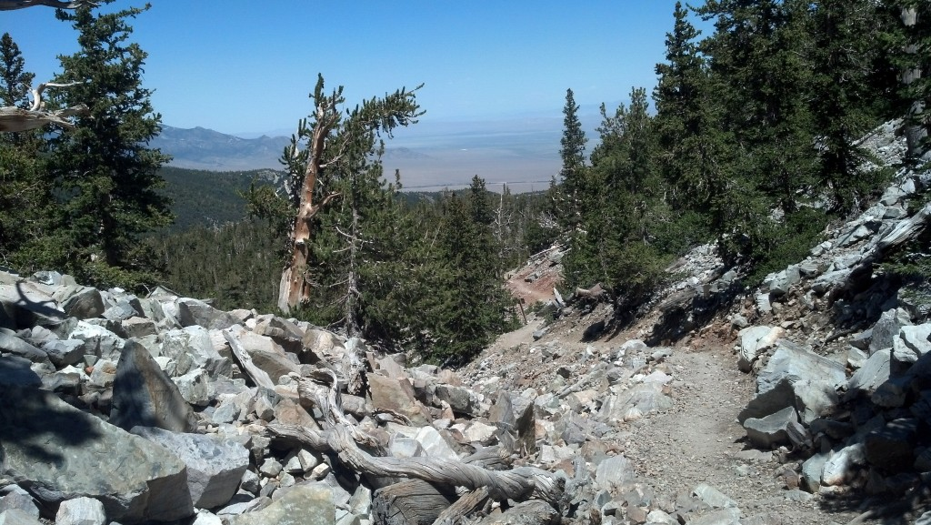 The Bristlecone Pine Trail on Mount Wheeler in Great Basin National Park (Photo by Michael E. Grass)