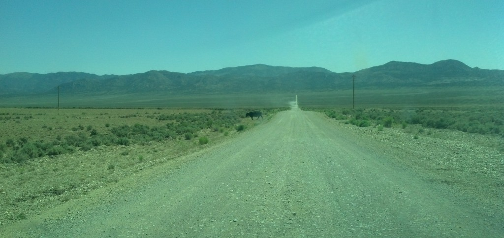 You cross the open range on the road to and from Ward, Nev. (Photo by Michael E. Grass)